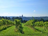 Albrechtsburg Meißen und die Weinberge des Weingutes Schloss Proschwitz Prinz zur Lippe