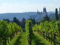 Blick über die Weinberge auf die Albrechtsburg Meißen