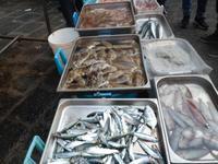 Sizilien 2014/04  Fischmarkt von Catania