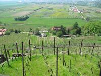 Ausblick auf den Weinberg