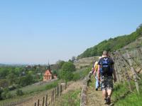 Weinberg-Wanderung