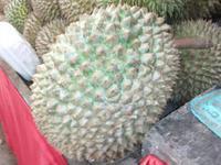 Durian - Stinkfrucht