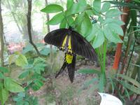 0217 Schmetterlingsfarm Penang