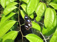 0232 Schmetterlingsfarm Penang