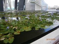 Singapur, Lotus Teich bei Marina Sands Bay