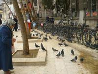 heilige Tauben