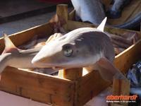 schöne Augen - auf dem Fischmarkt
