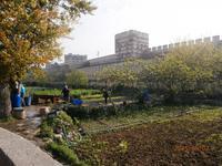Istanbul - Stadtmauer und Landwirtschaft im Graben