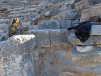 Tempelkatzen in Ephesus