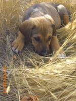Hund Efes