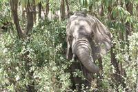 Elefanten im Lake Manyara Nationalpark