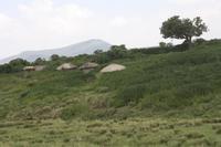Bomas - typische Unterkünfte der Massai