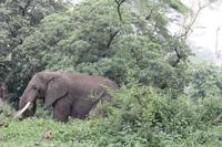 Elefant im Ngorongoro Crater