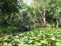 Auf gehts mit dem Propellerboot durch den Everglades National Park
