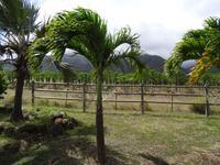 Maui - Tropical Plantation