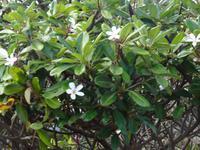Maui, tropische Plantage, Rundfahrt durch die Plantage