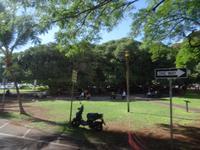 Maui, Lahaina - Platz mit dem größten Baum der Insel