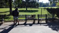 Im Central Park