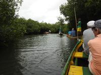 Kanufahrt durch die Mangroven