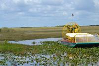 Everglades Miami (6)