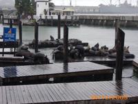DSCI0014_am Pier 39