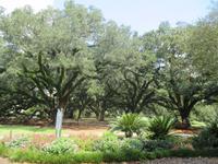 Oak Alley Plantage
