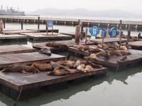 128_San Francisco - Pier 39 an der Fisherman's Wharf