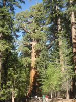 Im Yosemite-Nationalpark