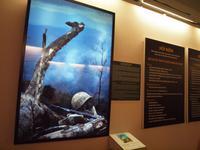 Besuch des Kriegsopfermuseums Saigon
