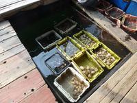 Ein Leben von Meeresfrüchten