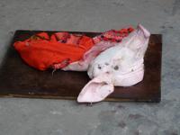 Das arme Schweinchen :-(