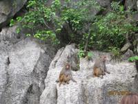 Die Affenfelsen in der Halong Bucht