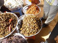 Spinnenmarkt auf dem Weg nach Siem Reap