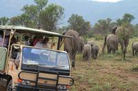 Safari im Pilanesberg-Nationalpark