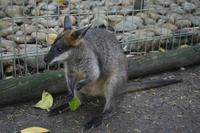Im Featherdale Tierpark