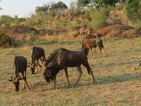 Safari Pilanesberg Nationalpark