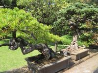 Happo-En Garten, Bonsai-Bäume