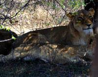 Löwenrudel im Schatten - 2 Alleinerziehende mit 4 Kindern