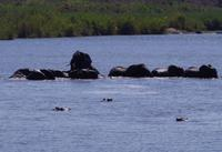 Elefantenbad mit Bademeister Hippo