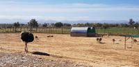 Besuch einer Straußenfarm