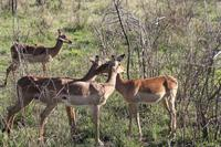 Safari im Hluhluwe Nationalpark