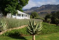 Swartberg Country Manor (6)