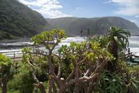 Tsitsikamma National Park (2)