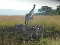 Auf Safari im Hluhluwe-Imfolozi-Nationalpark