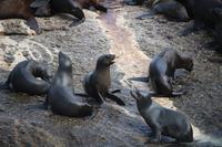 27 Seal-Island