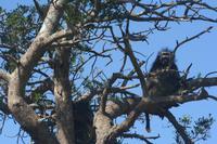 Paviane im Baum