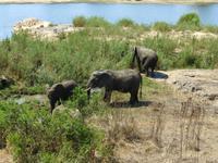 485_Erste Pirschfahrt im Kruger-Nationalpark
