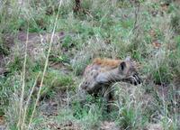 Kruger NP VII
