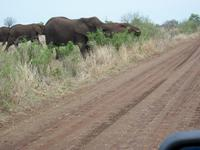 Kruger NP XVI