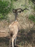 Kruger NP XVIII